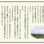 satobi37-24-yoshinonokai
