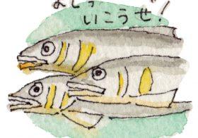 SATOBI COLUMN | あたらしい魚道ができた!@下北山村